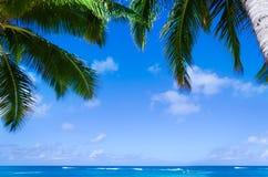 Palmblätter über Ozean in Hawaii Lizenzfreies Stockfoto