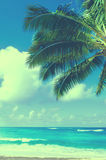 Palmblätter über Ozean in Hawaii (Weinleseart) stockbilder