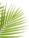 Palmblätter Lizenzfreie Stockbilder