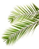 Palmblätter Stockfoto