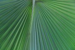 Palmblätter Stockfotografie