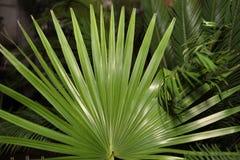 Palmblätter Stockfotos