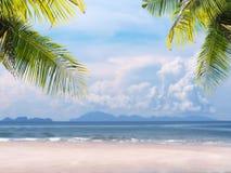 Palmblätter auf Sommerstrandhintergrund Lizenzfreies Stockfoto