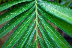 Palmblätter in den Tropen nach Regen Lizenzfreies Stockbild
