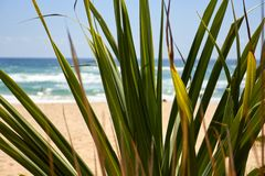 Palmblätter durch Strand mit einer Heuschrecke auf einer Niederlassung stockbilder