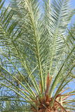 Palmblätter gegen den Himmel stockfotografie