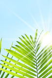 Palmblätter gegen einen Sommerhimmel lizenzfreie stockbilder