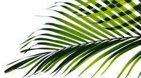 Palmblätter lokalisiert lizenzfreie stockfotografie