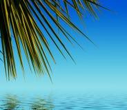 Palmblätter reflektiert im Wasser Lizenzfreie Stockfotos
