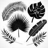 Palmblätter silhouettieren gesetztes Schwarzes stock abbildung