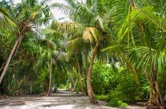 Palmblätter Tropischer Wald auf der Insel im Indischen Ozean Schöne Landschaft des feuchten tropischen Dschungels Tropischer Wald stockfotos