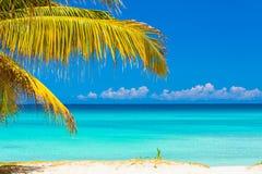 Palmblätter und der kubanische Strand von Varadero Lizenzfreie Stockfotos
