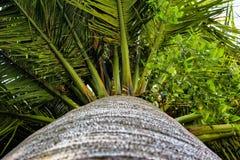 Palmblätter und Stamm Lizenzfreie Stockfotos
