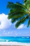 Palmblad över havet i Hawaii Arkivfoto