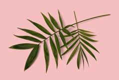 Palmblad Arkivfoton