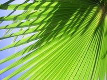Palmblad royalty-vrije stock afbeelding