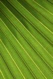 Palmblad Royalty-vrije Stock Afbeeldingen