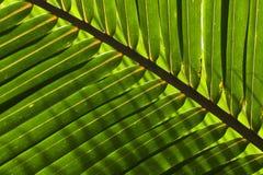 Palmblad Royalty-vrije Stock Foto's