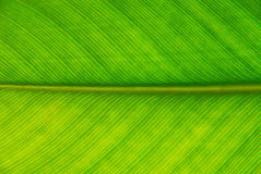 Palmblad Stock Foto