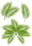 Palmblad stock illustrationer