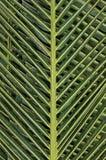 Palmblad Arkivbilder