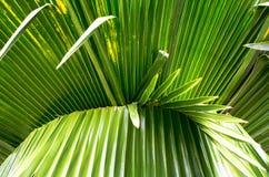 Palmblad royaltyfria bilder
