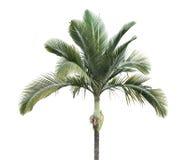 Palmblad royaltyfria foton