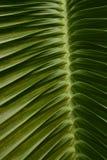 Palmblad arkivbild