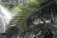 Palmblad - abstrakt naturlig bakgrund med blandningen av gräsplan och Grey Scale arkivbilder