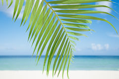 Palmblad, blauwe overzees en tropisch wit zandstrand ander de zon Stock Afbeeldingen