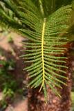 Palmblad in de regendalingen Stock Afbeeldingen