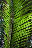 Palmblad in de wildernis Stock Foto