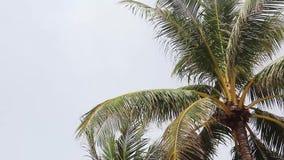 Palmblad die in de wind in het strand blazen stock footage