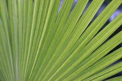 Palmblad in dierentuin in Duitsland stock foto