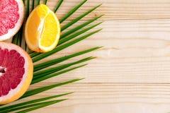 Palmblad med grapefrukten och apelsinen Tropiskt baner med frukter och ett ställe för en inskrift ferier royaltyfri foto