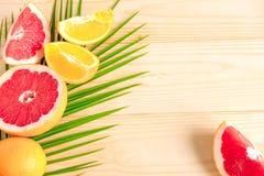 Palmblad med grapefrukten och apelsinen Tropiskt baner med frukter och ett ställe för en inskrift ferier royaltyfria bilder