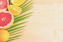 Palmblad med grapefrukten och apelsinen Tropiskt baner med frukter och ett ställe för en inskrift ferier arkivbild