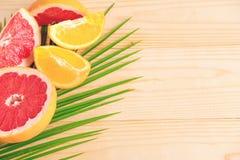 Palmblad med grapefrukten och apelsinen Tropiskt baner med frukter och ett ställe för en inskrift ferier arkivfoto