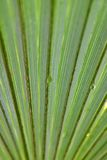 Palmblad met het Druppeltje van het Water Stock Foto