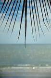 Palmblad och hav Arkivbilder