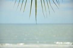 Palmblad och havet Royaltyfri Bild