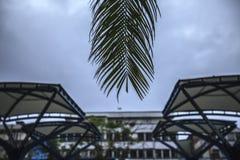 Palmblad och många skjul Royaltyfri Bild