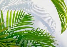 Palmblad och skuggor Royaltyfri Foto