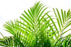 Palmblad och skuggor på en vit vägg Arkivbilder