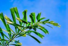 Palmblad op blauwe achtergrond stock afbeeldingen