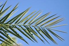 Palmblad op blauwe hemelachtergrond stock afbeelding