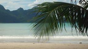 Palmblad op een tropisch strand met het erachter overzees stock video