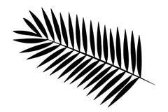 Palmblad op witte achtergrond stock fotografie