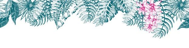 Palmblad Sketch11 Fotografering för Bildbyråer