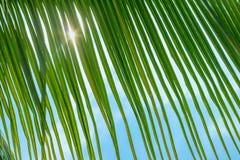 Palmblad, sol och hav arkivbild